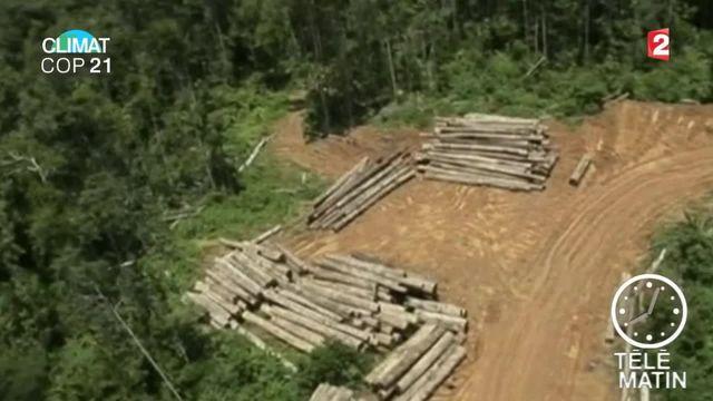 COP 21 : comment mieux protéger les forêts