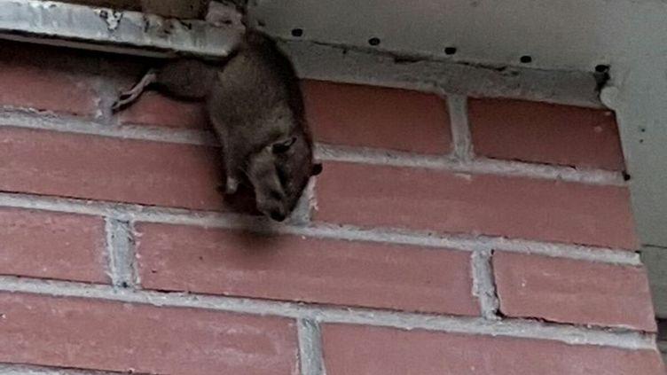 Depuis la destruction des parkings, les rats ont envahi la cité des Hautes-Noues. (VIRGINIE PIRONON / RADIO FRANCE)