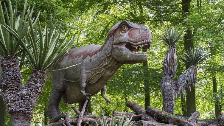 """Une étude publiée dans """"Science Advances"""" suggère que les tyrannosaures nains n'ont pas existé. (PHILIPPE CLEMENT / BELGA MAG / AFP)"""