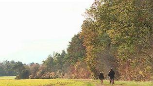 Le journal du 13 Heures vous emmène en balade dans une forêt majestueuse de la Haute-Marne. Les couleurs y sont flamboyantes, c'est une source d'inspiration pour les peintres et photographes. (CAPTURE ECRAN FRANCE 2)