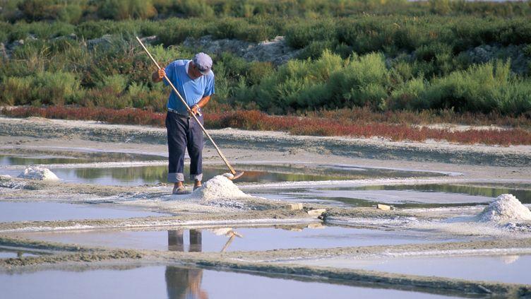 Saunier récoltant son sel, sur l'île de Ré (Charente-Maritime), en 2015. (JEAN-PIERRE DE MANN / ROBERT HARDING HERITAGE / AFP)