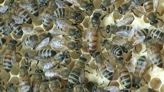 Il faut sauver les abeilles des pesticides