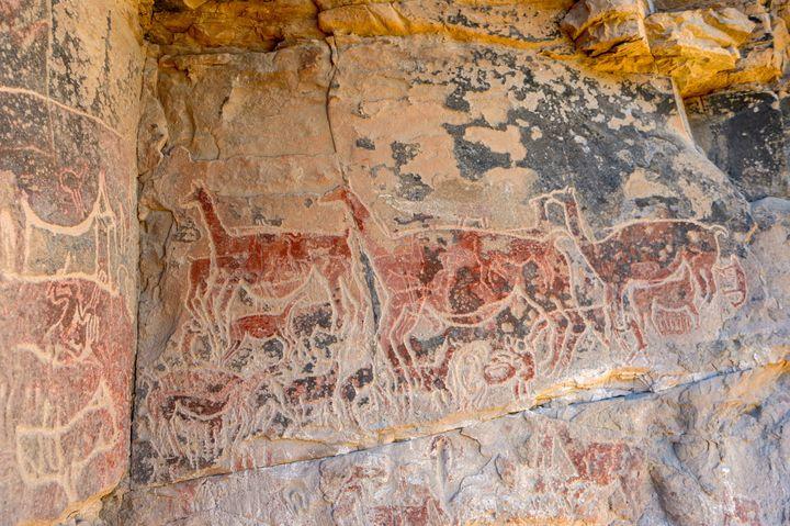 Le sujet principal des peintures rupestres de taira : des lamas  (MARTIN BERNETTI / AFP)