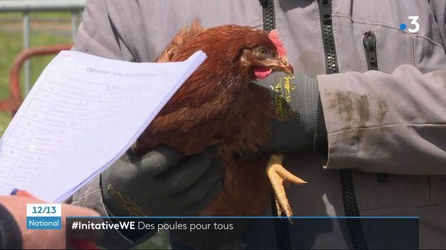Cantal : adopter des poules pour réduire ses déchets ménagers