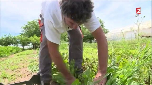 Albi veut obtenir son autosuffisance alimentaire d'ici 2020