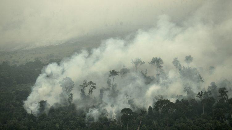 Un feu de forêt en Indonésie (SUTANTA ADITYA / ANADOLU AGENCY)