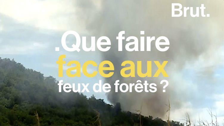 VIDEO. Quels sont les réflexes à adopter pour éviter un feu de forêt ? (BRUT)
