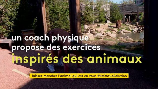 Séances de sport au zoo d'Amnéville avec les animaux
