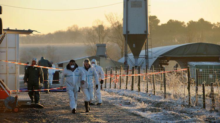 Des employés préparent l'euthanasie de canards d'élevage, à Saint-Agnet (Landes), le 6 janvier 2017. (MAXPPP)