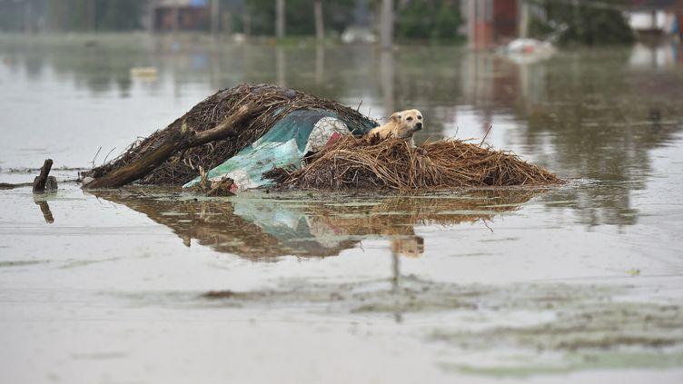 Un chien piégé par les inondations en Chine, le 3 juillet 2016. (REUTERS)