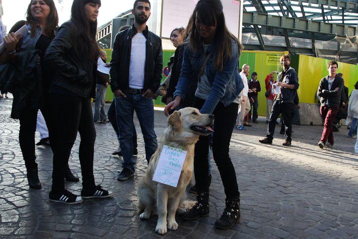 Le chien d'Ezgi transformé en porte-étendard pour l'occasion. (MARIE DESHAYES / FRANCETV INFO)
