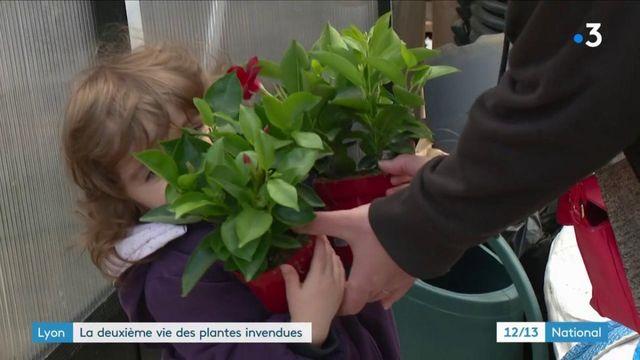 Lyon : la SPA des plantes lutte contre le gaspillage des végétaux