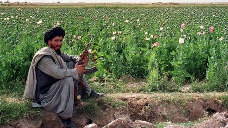 Champs de pavot,en 2000 dans la province de Kandahar (AFP/JEAN CLAUDE-CHAPON)