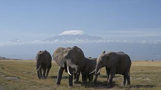 Les glaciers du Kilimandjaro (5 900 mètres), à la frontière entre le Kenya et la Tanzanie, pourraient disparaître avant 2040. Parc Amboseli (mars 2007). (MICHEL & CHRISTINE DENIS-HUOT / BIOSPHOTO)
