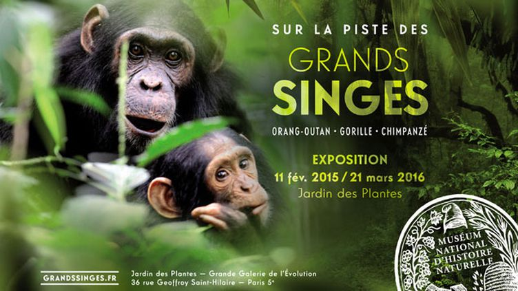 (Sur la piste des Grands Singes © MNHN - Jean-Michel Krief)