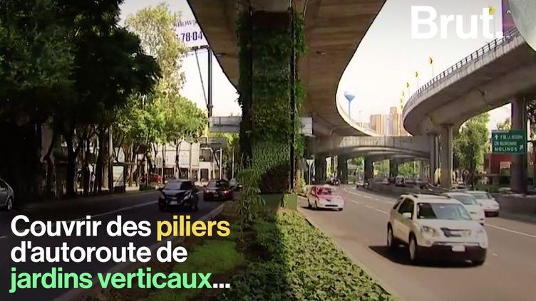 VIDEO. Pour dépolluer, Mexico investit dans des murs végétaux (BRUT)