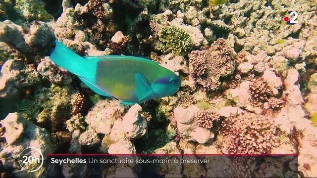 Seychelles : un patrimoine marin sanctuarisé