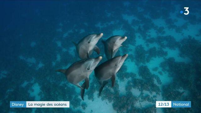 """""""Blue"""" : Disney filme la magie des océans"""