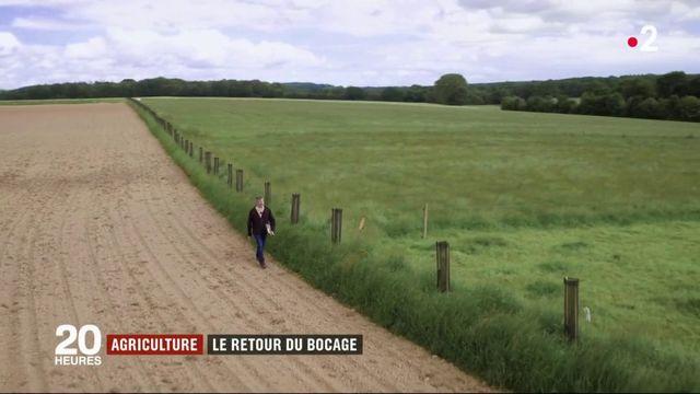 Agriculture : le retour du bocage dans les champs bretons