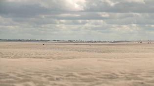 Direction la baie de Somme, classée parmi les plus belles baies au monde. Les randonnées guidées ont repris. Les caméras de France 3 ont suivi un groupe de touristes à la recherche d'un animal star. (FRANCE 3)