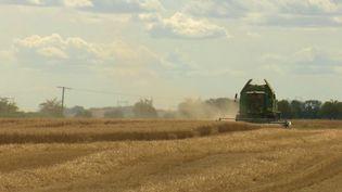 Champ de blé (FRANCE 2)
