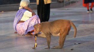 Inde : les singes ont envahi New Delhi pendant le confinement (Capture d'écran France 2)