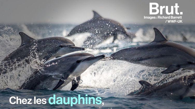 VIDEO. Comment les dauphins dorment-ils ? (BRUT)