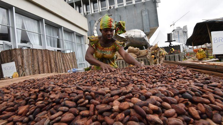 Des fèves de cacao devant le bâtiment de la Caisse ivoirienne de stabilisation des produits agricoles à Abidjan (Côte d'Ivoire). (SIA KAMBOU / AFP)
