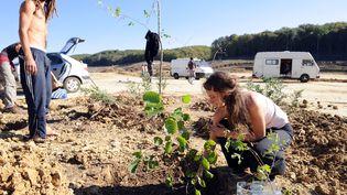 Des opposants au barrage de Sivens (Tarn) plantent un arbre sur le site du chantier, le 29 octobre 2014. (REMY GABALDA / AFP)