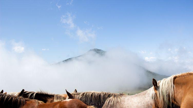 Des chevauxdans lesPyrénées, en 2018. (MARTIN BERTRAND / HANS LUCAS / AFP)
