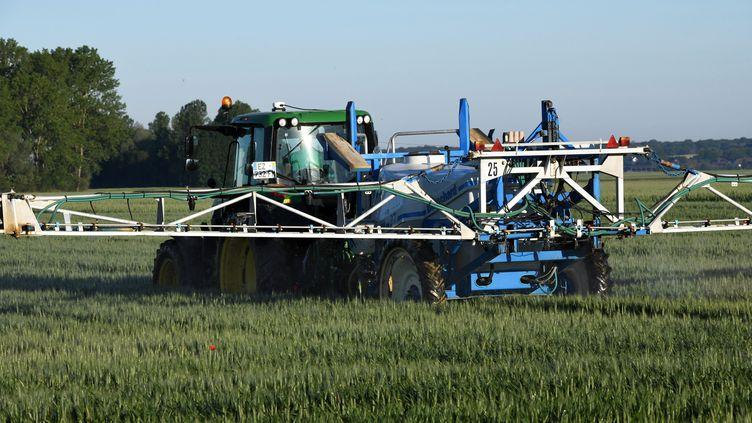 Un champs de céréales traité avec des pesticides. (JEAN-PIERRE AMET / MAXPPP)