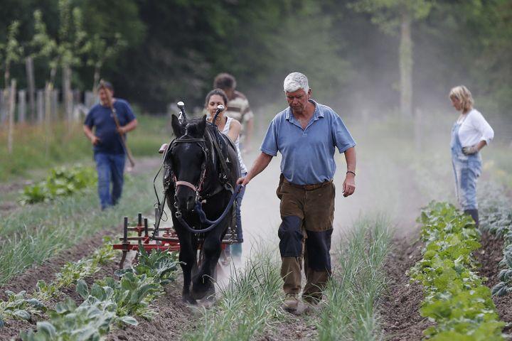 Charles Hervé-Gruyer travaille une zone de maraîchage à la ferme du Bec Hellouin (Eure), le 25 mai 2018. (CHARLY TRIBALLEAU / AFP)