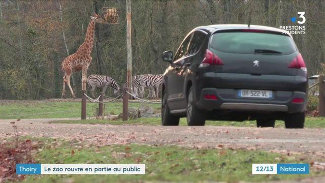 Thoiry : le zoo rouvre ses portes pour les fêtes