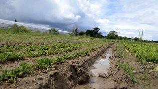 En France, le chlorpyrifos n'est plus utilisé que pour les épinards. (PHILIPPE DESMAZES / AFP)