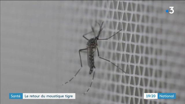 Santé : le retour du moustique tigre en France