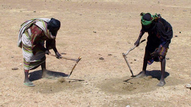 Des Tchadiennes cherchent des grains de céréales dans le sol désertique en novembre 2011. Des millions de personnes sont menacées de famine dans la bande sahélienne. (IRINA FUHRMANN / OXFAM / AFP)