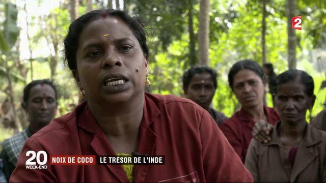 Inde : la noix de coco, un trésor national