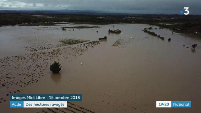 Aude : des hectares ravagés après les inondations