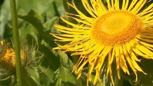 Le jardin du col du Lautaret dans les Hautes-Alpes fête ses 120 ans. C'est un site touristique, mais aussi un laboratoire scientifique. Il étudie les effets du réchauffement climatique sur la flore de montagne. (FRANCE 3)