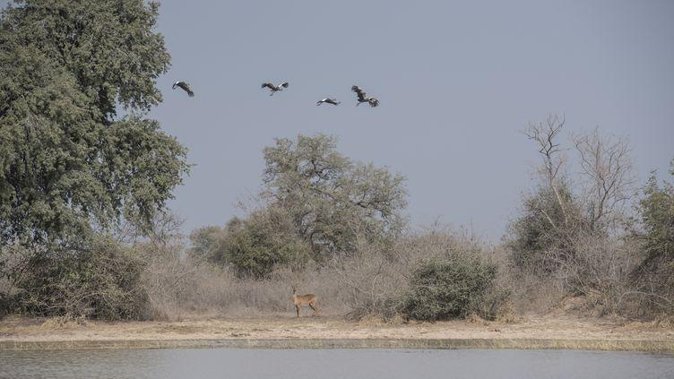 Le parc national de la Pendjari, au Bénin, où ont disparu deux Français le 1er mai 2019. Pris en otage, ils ont été libérés par les forces spéciales françaises au Burkina Faso. (STEFAN HEUNIS / AFP)