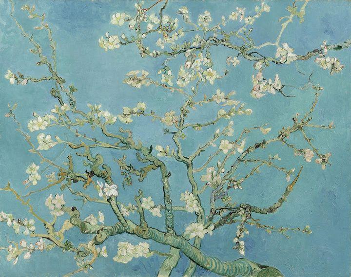 """Vincent van Gogh, """"Amandier en fleur"""", Saint-Rémy-de-Provence, février 1890    (Van Gogh Museum, Amsterdam (Vincent van Gogh Foundation))"""