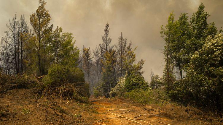 Près de 900 pompiers ont été mobilisés pour combattre les flammes sur le village d'Avgaria, sur l'île grecque d'Eubée, le 8 août 2021. (ANGELOS TZORTZINIS / AFP)