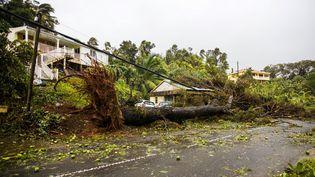 Des arbres couchés à Pointe-à-Ptire (Guadeloupe), le 19 septembre 2017. (CEDRICK ISHAM CALVADOS / AFP)