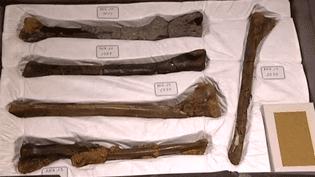 Les ossements des dinosaures d'Angeac entrent au Musée D'Angoulême  (France 3 / capture d'écran)