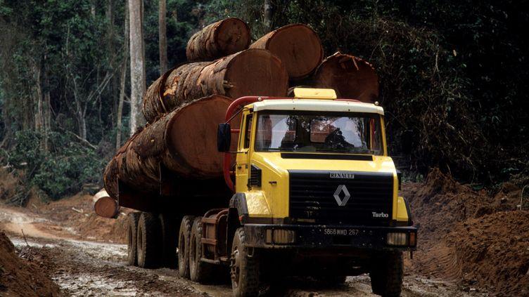 Camion forestier dans la forêt vierge du Congo. Photo prise le 29 mai 2006. Le recul de la forêt tropicalese poursuit de manière accélérée selon un rapport de la Fao. (Michel Gunther / Biosphoto / Biosphoto via AFP)