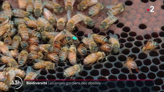 Biodiversité : les animaux nous rapportent beaucoup, et en particulier, les abeilles