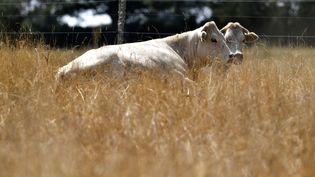 Un élevage de bovins près de Lussat (Creuse), le 20 juillet 2019. (GEORGES GOBET / AFP)