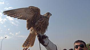 Des responsables de la faune relâchent un faucon à Peshawar, au Pakistan, le 23 octobre 2019. (ABDUL MAJEED / AFP)