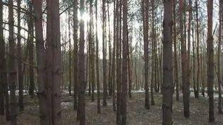 La forêt de Kampinos, en Pologne (france 2)