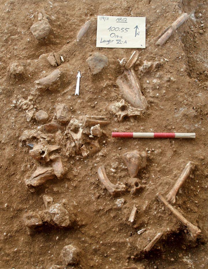 Le document photocomplet mis à disposition par le Dr Yossi Zaidner de l'Université hébraïque de Jérusalem,montrant des os et d'autres objets découverts lors des fouilles sur un site à Nesher Ramla, dans le centre d'Israël,publié le 24 juin 2021. (TEL-AVIV UNIVERSITY / AFP)